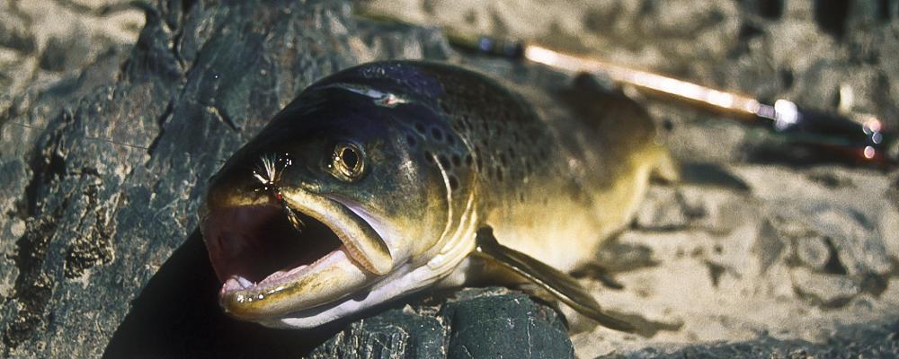 Flyfishing in Switzerland & Iceland 005