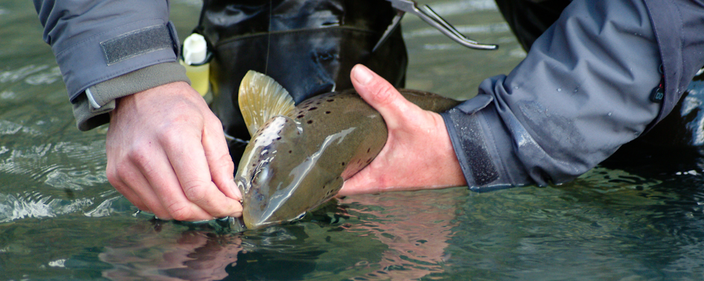 switzerland flyfishing 02